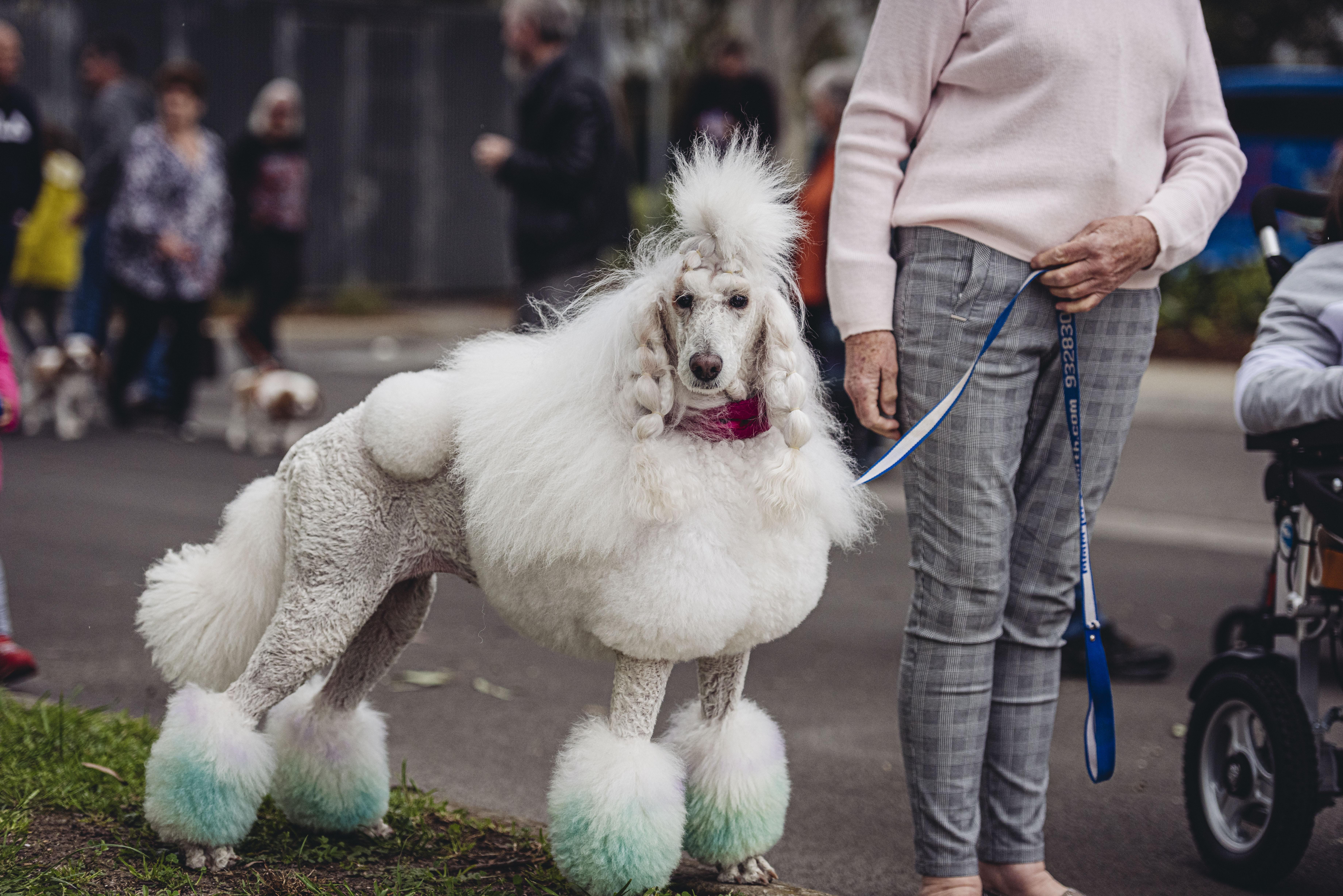 Pet & Animal Expo | Wyndham City