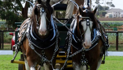 National Clydesdale & Heavy Horse Festival